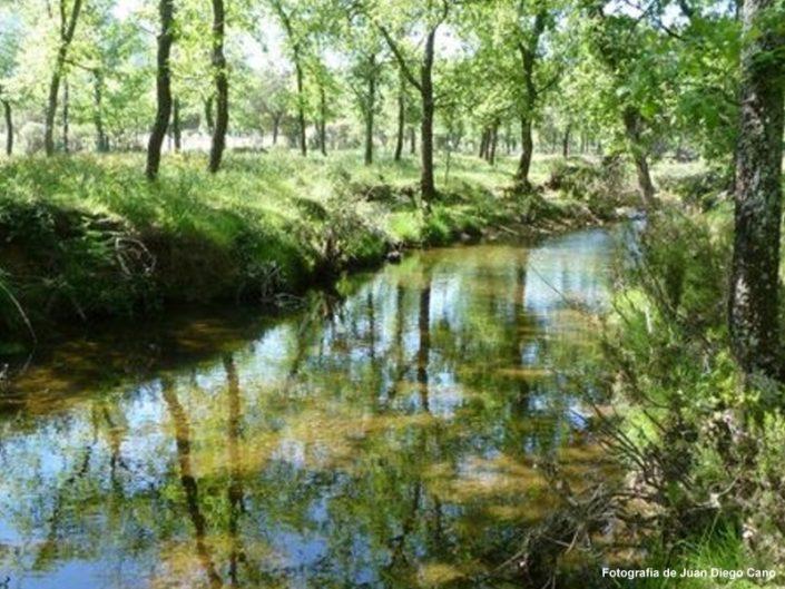 Río Cedena
