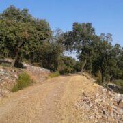 Ruta de Senderismo Umbría La Galinda Montes de Toledo