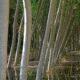 Chopos y Álamos - Casa Rural Finca los Pájaros - Montes deToledo