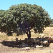 Encina - Casa Rural Finca los Pájaros - Montes deToledo