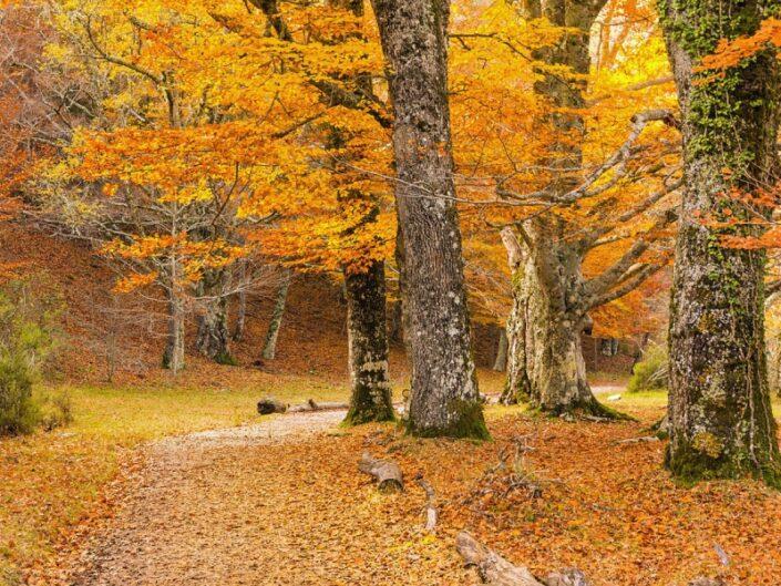 El otoño en los Montes de Toledo